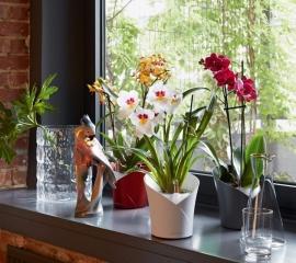 04-orchidea