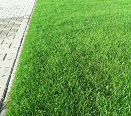 06-travnaty_koberec