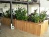 04-mix_zelenych_rostlin