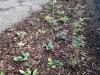 06-vysadba_rostlin