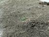 06-Likvidace_plevelu_totalnim_herbicidem