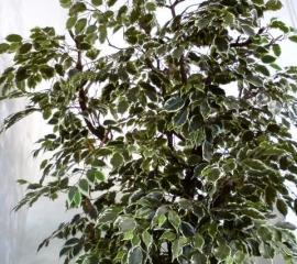 umely_strom.jpg