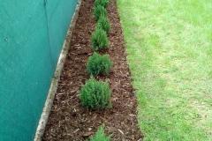 Realizace zahrady - výsadba živého plotu